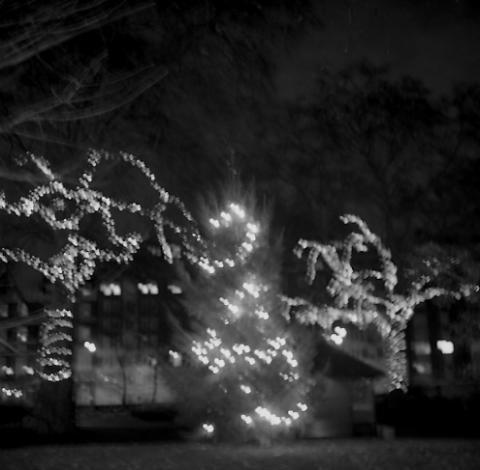 Christmas Lights (1), Portman Square, London - Trees