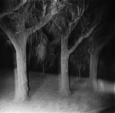 Whistling Pines, Bermuda - Trees