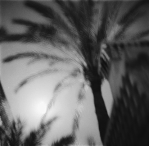 Royal Palm, Morocco - Trees