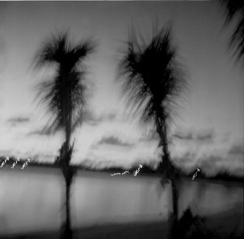Palms overlooking Jumby Bay, Antigua - Trees